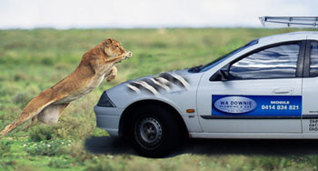 The ute and the Lion
